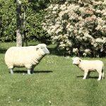 La Cabane de Mathilde, et ses moutons